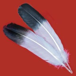 "Jumbo Imitation Eagle Wings, 13""-15"" Select"