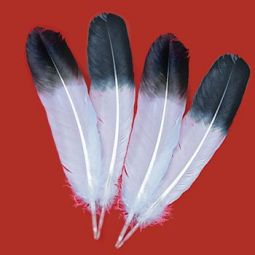 "Jumbo Imitation Eagle Wings, 13""-15"" Bulk"