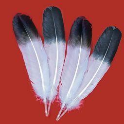 """Jumbo Imitation Eagle Wings, 13""""-15"""" Select"""