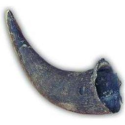 Buffalo Horns - Large