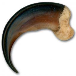 "Replica Black Bear Claw- Large 3-1/2"""