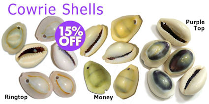 Drilled Cowrie Shells