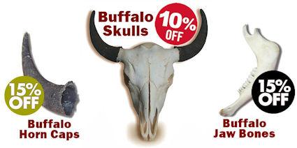 Buffalo Skulls, Jaws & Horns